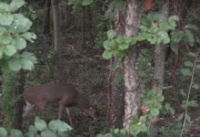 Photo of The Backyard Buck with Lethal Injection Outdoors